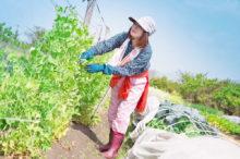 野菜ぎらいの農家娘の弟子入り農業日記